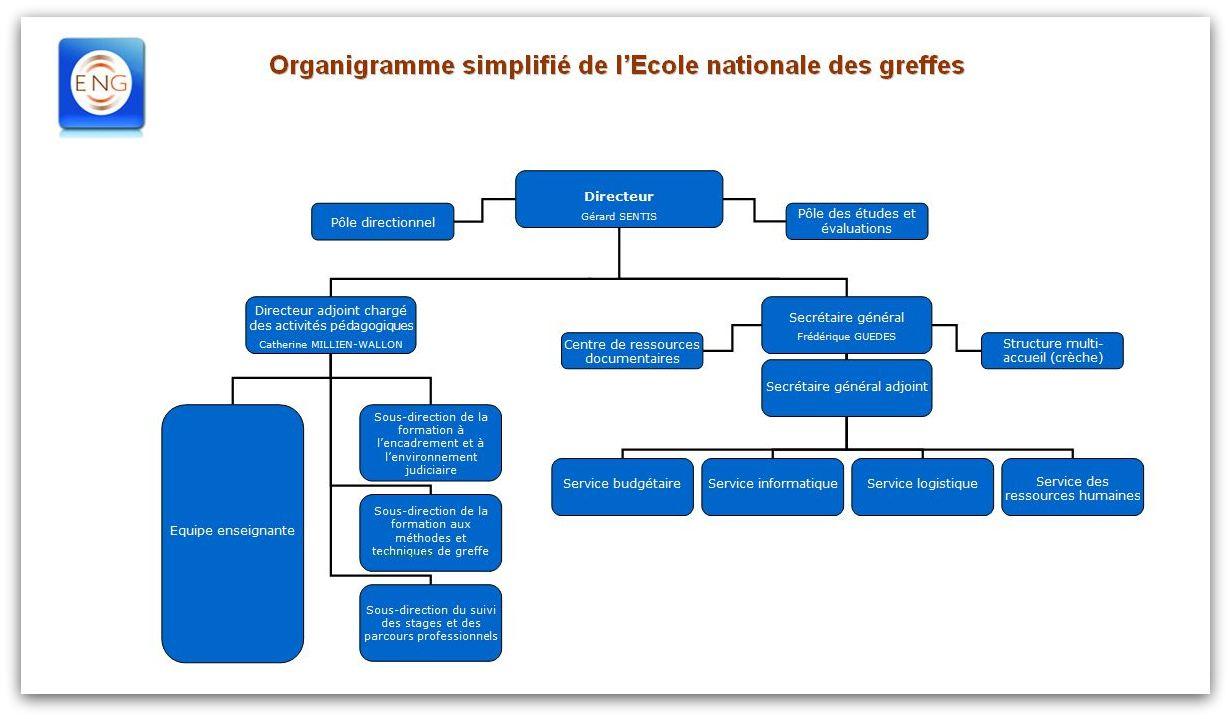 Organigramme simplifié de l'Ecole nationale des greffes